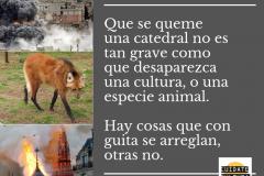 Que-se-queme-una-catedral-no-es-tan-grave-como-que-desaparezca-una-cultura-o-una-especie-animal.-Hay-cosas-que-con-guita-se-arreglan-otras-no.