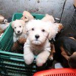 Comercio ilegal de mascotas